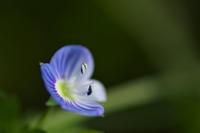 小さな花たちも - Change The World