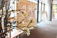 観光館の剪定桜と検定上級解答掲示について - 弘前感交劇場
