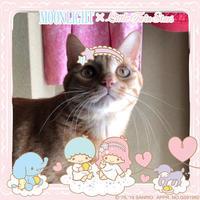 キキララ - 愛犬家の猫日記