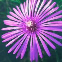・花火のような花・ - - Foliage & Blooms'葉と花' pics. -