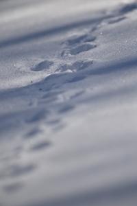 この冬最後の雪漕ぎかーー - healing-bird
