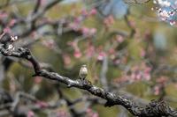続編 - 趣味の野鳥撮影