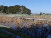 南寄りの風強し - 千葉県いすみ環境と文化のさとセンター