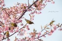 じろーes - Berry's Bird
