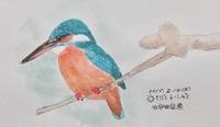 #野鳥スケッチ #ネイチャー・ジャーナル『翡翠』Alcedo atthis - スケッチ感察ノート (Nature journal)