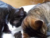 ドラマ「浮世の画家」 - ネコと文学と猫ブンガク