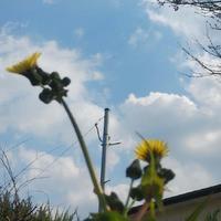 春を感じながら - 絵・空・ごと日記