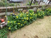 春爛漫花盛りの庭 - にゃんてワンダホー!