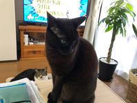 リハビリが好きになれない - いぬ猫フェレット&人間