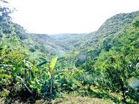 バナナと椎茸栽培、島生姜、接ぎ木について - チルチルCafe&野遊び