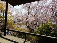 春の和室公開、今年は桜の開花日から - 大佛次郎記念館NEWS