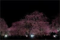 light up - 光のメロディー