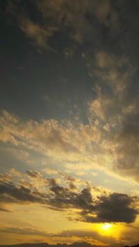 夕方散歩 - TACOSの野鳥日記