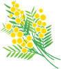 ミモザの花 - ある日ある時
