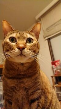 猫の顔が人に見えるとき - 毎日が好奇心!