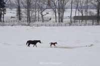 子馬のシーズン - ekkoの --- four seasons --- 北海道