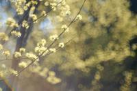 山茱萸 - feel a season