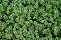 名もなき雑草でも懸命に春を告げています - スポック艦長のPhoto Diary