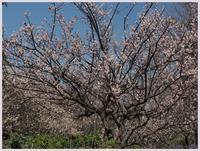 赤塚植物園から郷土資料館へ-1013) - 趣味の写真 ~OLYMPUS E-M1MarkⅡ、PenF~