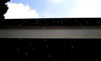 ホワイトデー・・・針畑・朽木小川の涅槃会、雪が降る - 朽木小川より 「itiのデジカメ日記」 高島市の奥山・針畑からフォトエッセイ