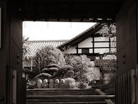 早春の京都その6(東福寺) - 風任せ自由人