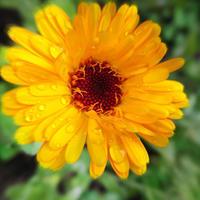 ・ぶれる花びら・ - - Foliage & Blooms'葉と花' pics. -