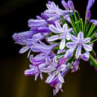 ・雨の日の開花・ - - Foliage & Blooms'葉と花' pics. -