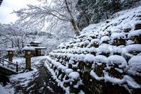 雪景色!~愛宕念仏寺~ - Prado Photography!