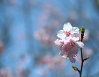 桜 - 光りの音   photo gallery