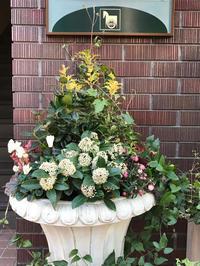 スキミアの花が咲きました!! - piecing・針仕事と庭仕事の日々