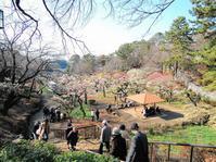 ある風景:Okurayama, Yokohama@Spring #1 - MusicArena