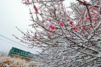 ホワイトデーの雪景色 - 今日も丹後鉄道