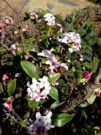 咲いてから1週間・・・ - 【出逢いの花々】