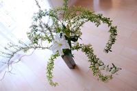 本日の「素敵だCOLOR」は、可憐な小花。 - 色彩コンサルタント 松本千早のブログ REAL COLOR DREAM