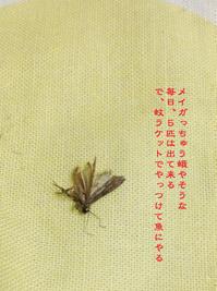火傷した! - Tangled with 2・・・・・