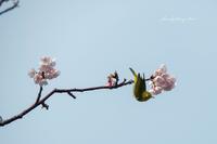 飛べ~ - Berry's Bird