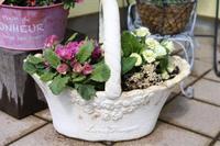 寄せ植えと植え替え - my small garden~sugar plum~