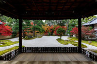 京の紅葉2018彩りの廬山寺 - 花景色-K.W.C. PhotoBlog