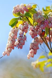 早春の花  32019-03-16更新 - 夕陽に魅せられて・・・