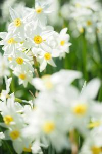 春のきざし - カメラとさんぽ