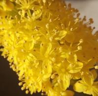 この花は… - 侘助つれづれ
