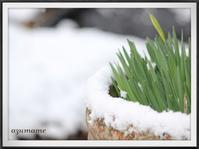 一瞬の雪景色 - キルトとステッチ時々にゃんこ