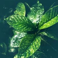 ・緑の葉 #3・ - - Foliage & Blooms'葉と花' pics. -