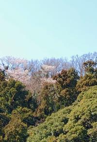 鎌倉心景「桜」 - 海の古書店