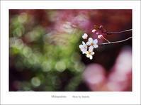 春めく日に - Minnenfoto