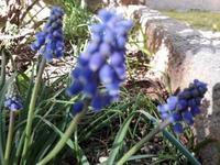春ですよ~!!花いっぱいの南仏イエール - 南仏、青い空の下で暮らす