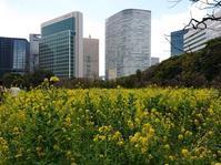 都会の菜の花畑 - うららフェルトライフ