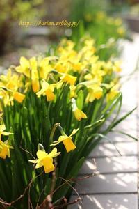 落ち着かない早春復活を願って - miyorinの秘密のお庭