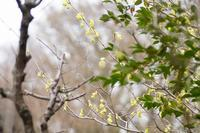 野草園〜春の木と花の風景 - 柳に雪折れなし!Ⅱ