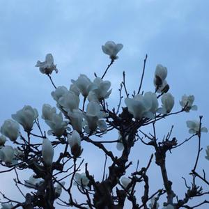 朝RUNのコース沿いにも花が咲いています。 - 日日日影新聞 (nichi nichi hikage shinbun)